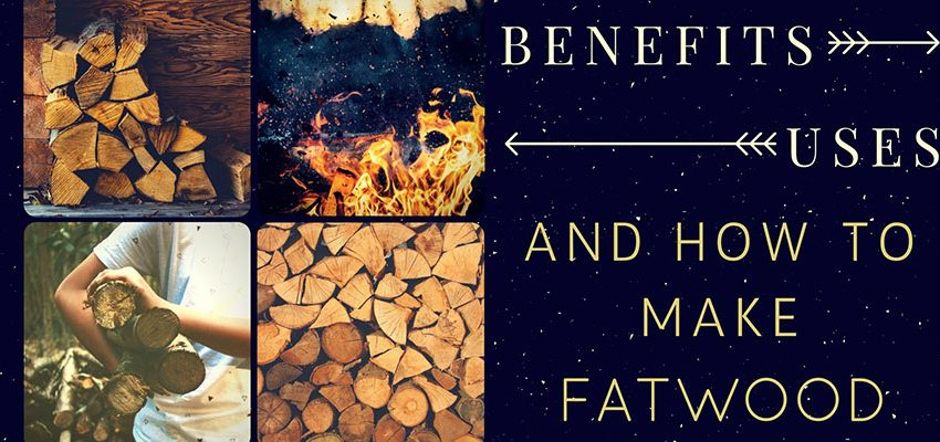 Learn How To Make Fatwood
